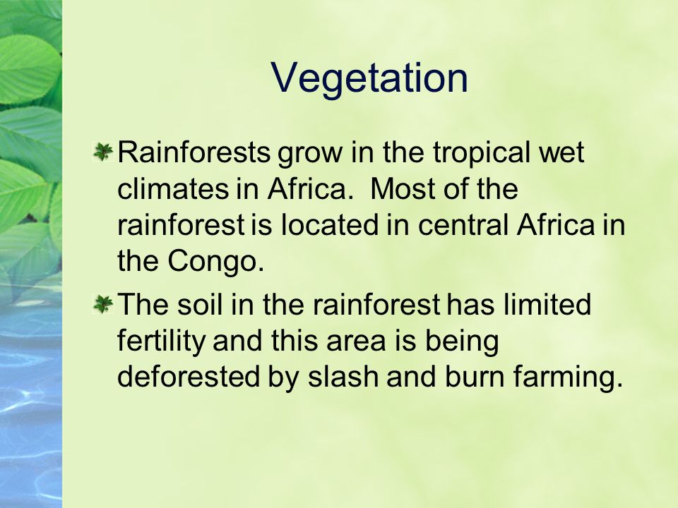 Vegetation Rainforests grow in the tropical wet climates in Africa.