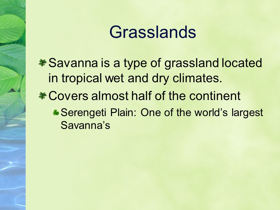 Grasslands Savanna is a type of grassland located in tropical wet and dry climates.