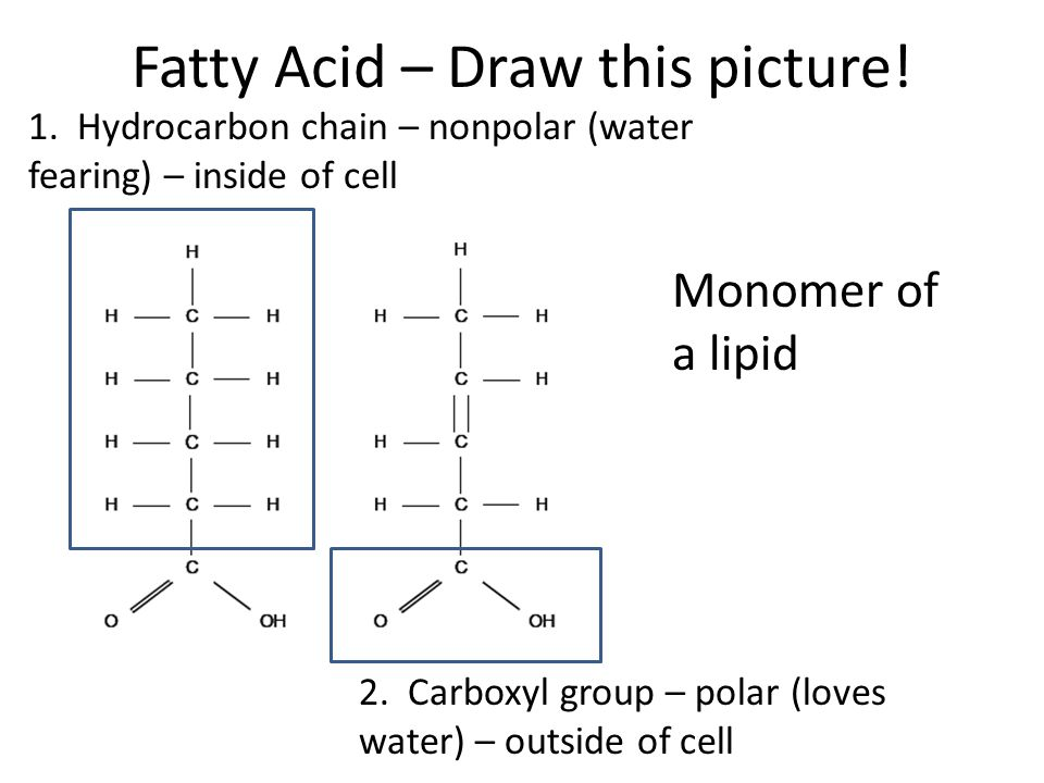 fatty acid – draw this picture  monomer of a lipid 2