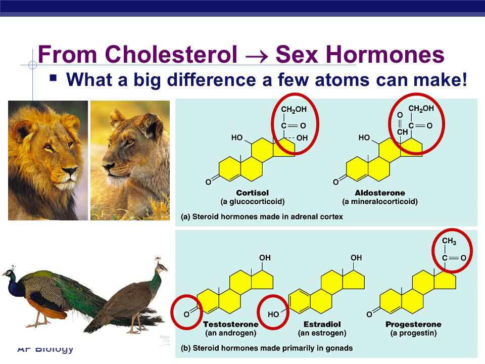 AP Biology Cholesterol helps keep cell membranes fluid & flexible Important component of cell membrane