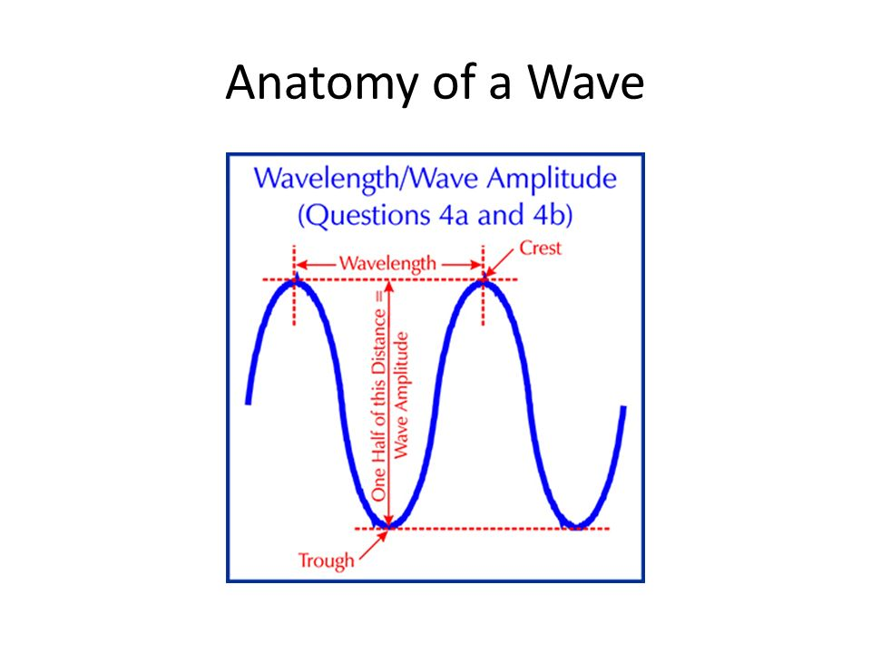 Anatomy of a Wave. Waves- Main Causes Waves do not move across the ...