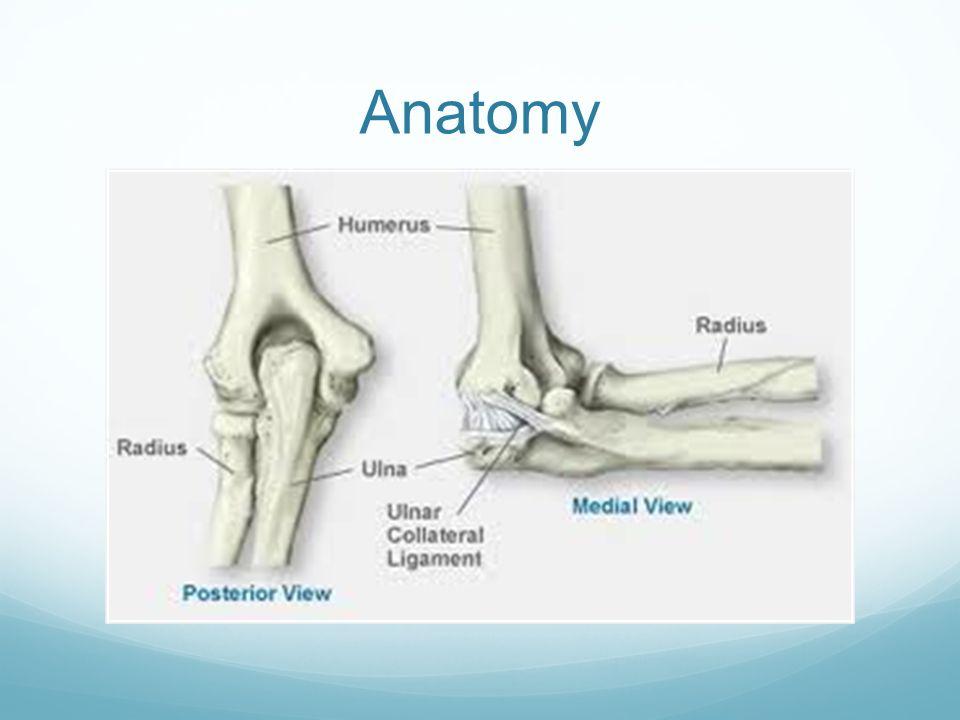 Elbow Injuries Anatomy Elbow Dislocation Elbow Bursitis Ppt Download