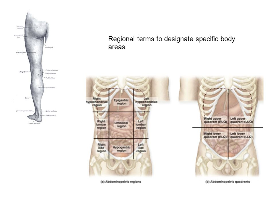 Introduction to Anatomy & Physiology. Anatomy is …. the structure of ...