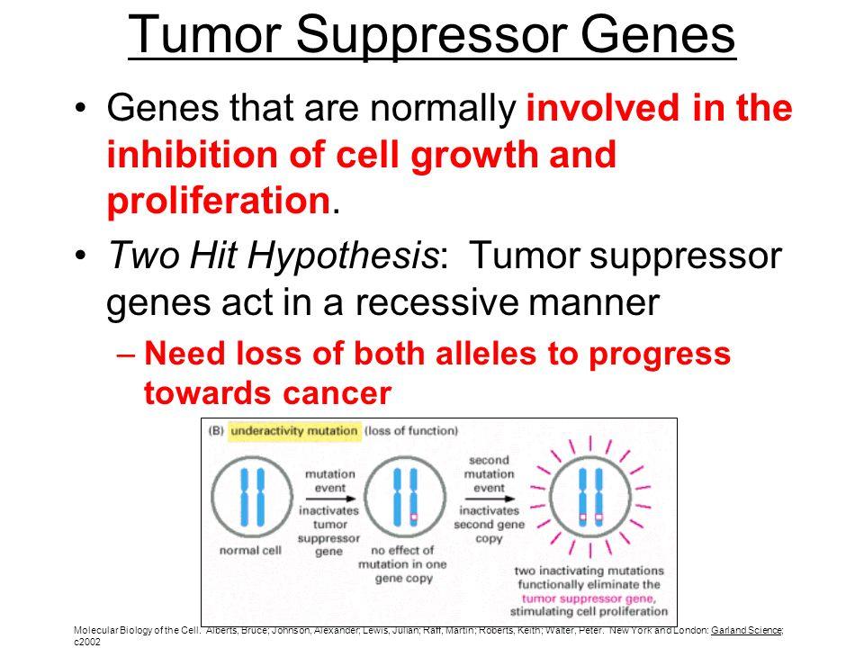 March 5 Lecture Outline Oncogenes Tumor Suppressor Genes Multiple
