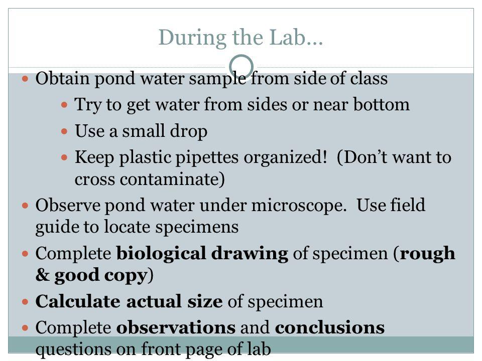 pond water pond water web webweb lesson plan lesson