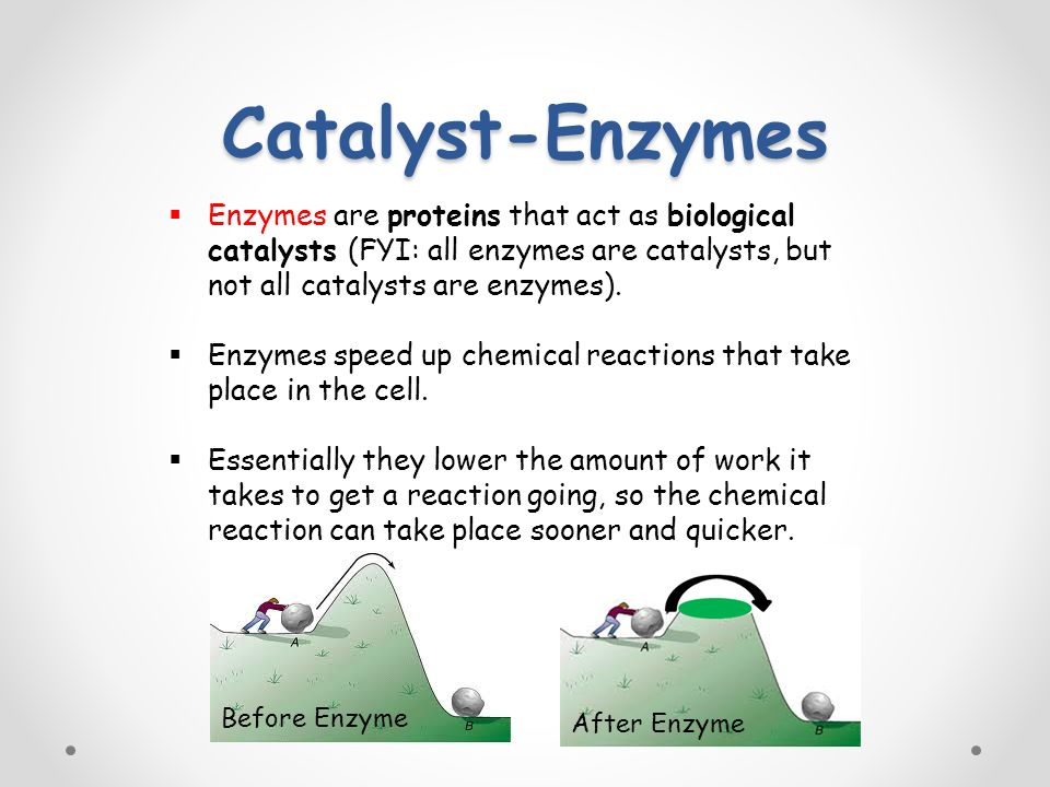Catalyst-Enzymes  Enzymes are proteins that act as biological catalysts (FYI: all enzymes are catalysts, but not all catalysts are enzymes).