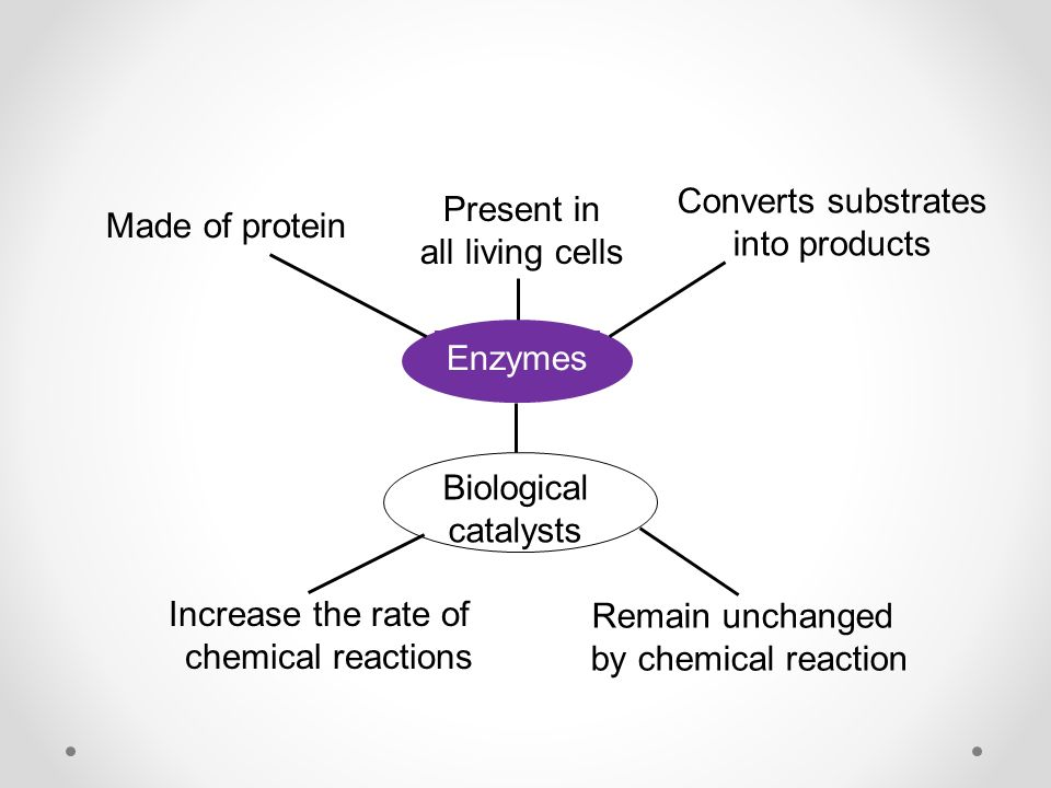 Enzymes Made of protein Present in all living cells Converts substrates into products Biological catalysts Increase the rate of chemical reactions Remain unchanged by chemical reaction