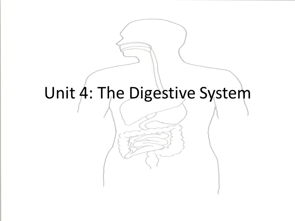 Unit 4: The Digestive System. Essential Questions What are the ...