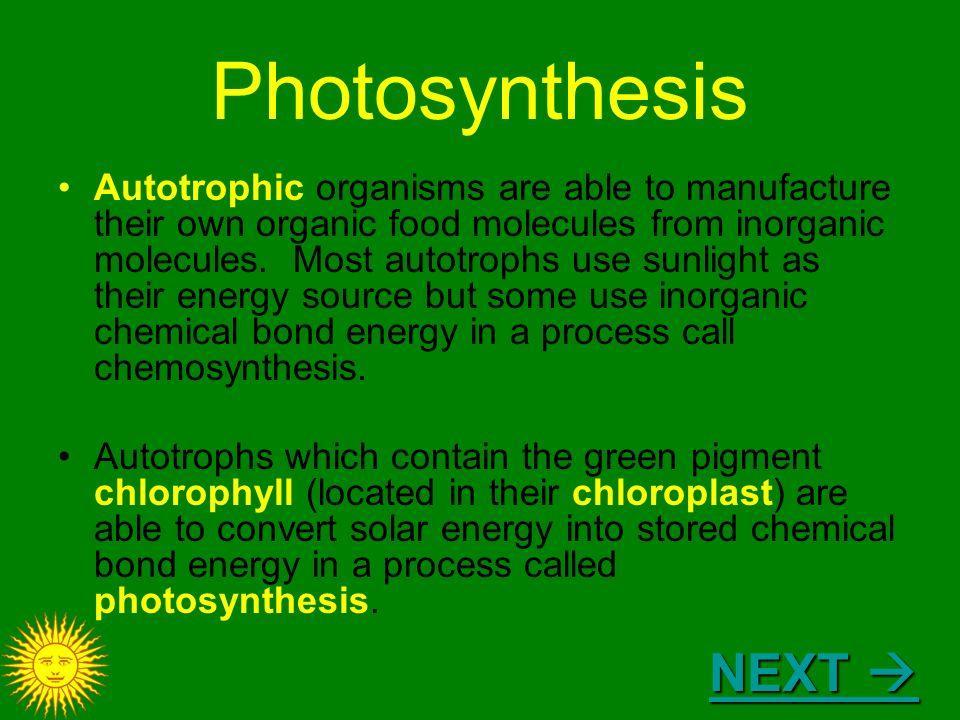 ap bio photosynthesis quiz
