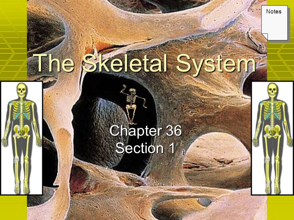 The Skeletal System Chapter 36 Section 1 Notes. Keys Lecture Outline ...