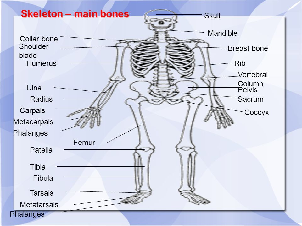 The Skeletal and Muscular Systems Aim: To understand the role played ...