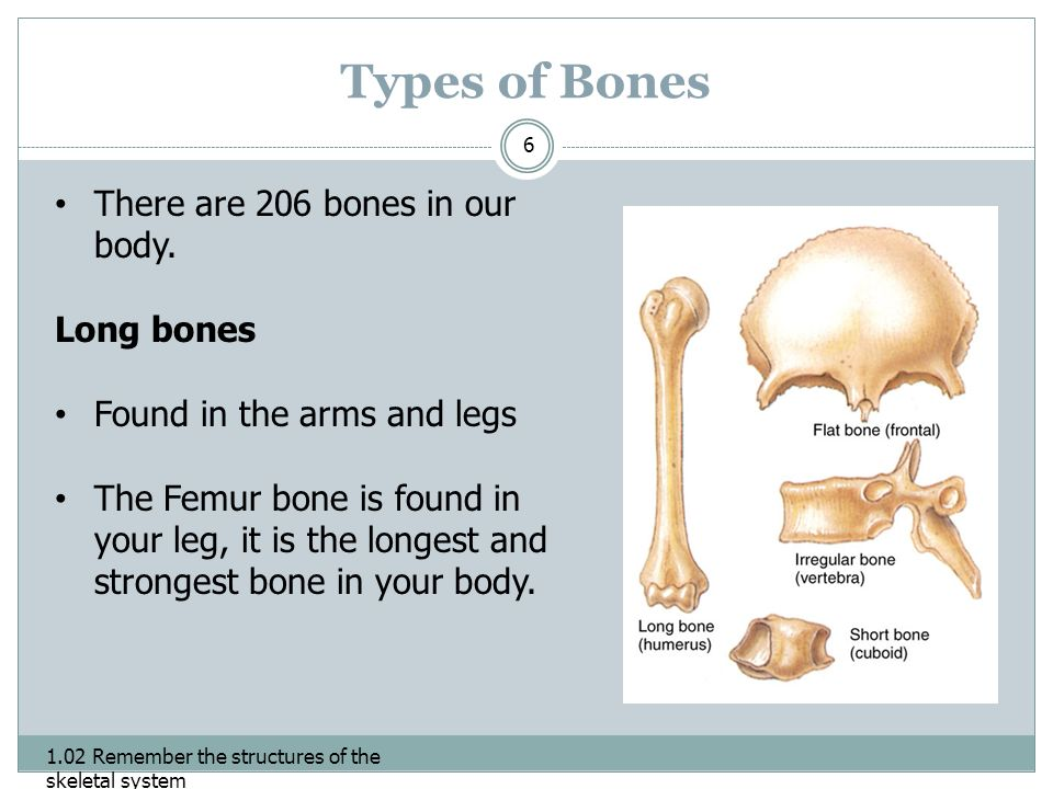 102 The Structures Of The Skeletal System Bone Formation 102