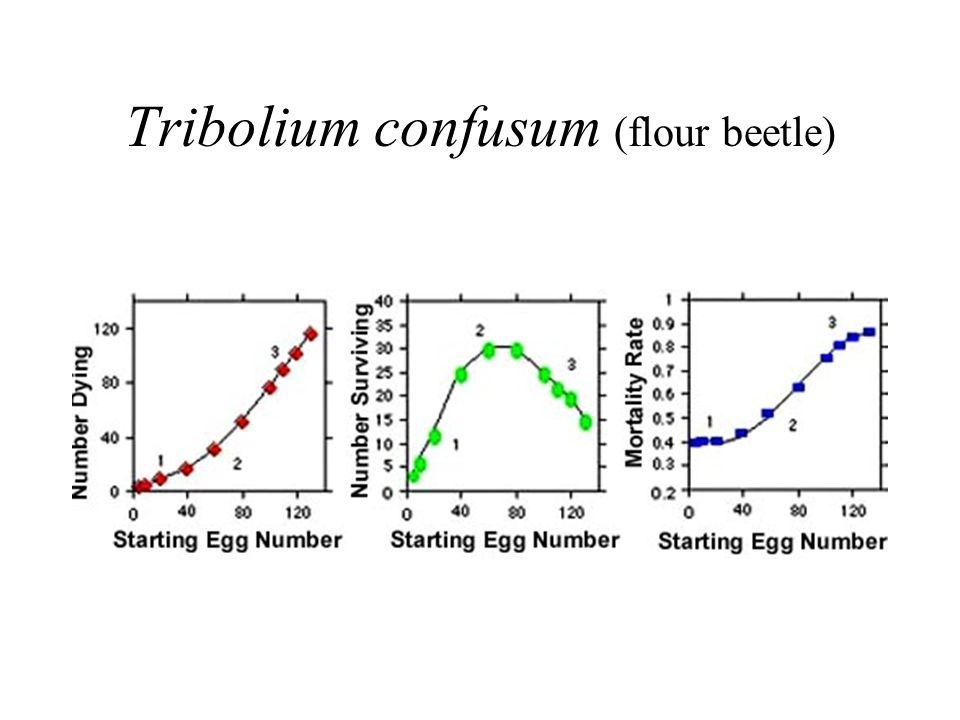 flour beetle population growth