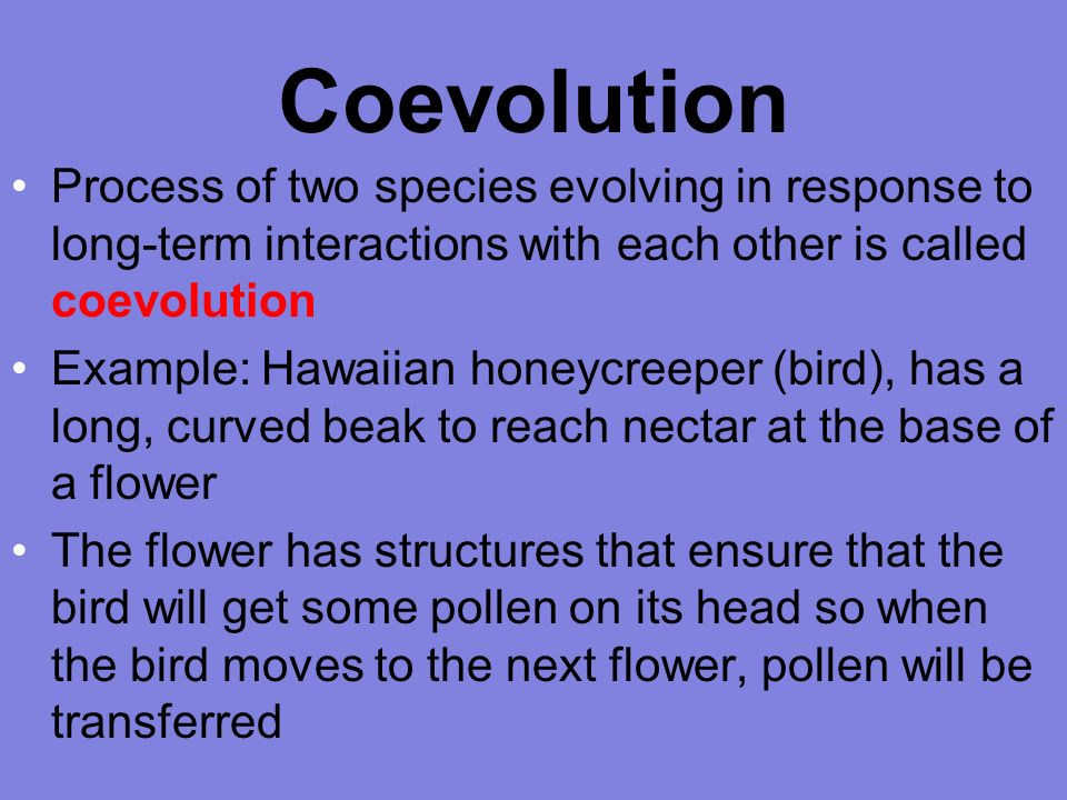 Chapter 4 Section 2 Evolution Objectives Explain The Process Of