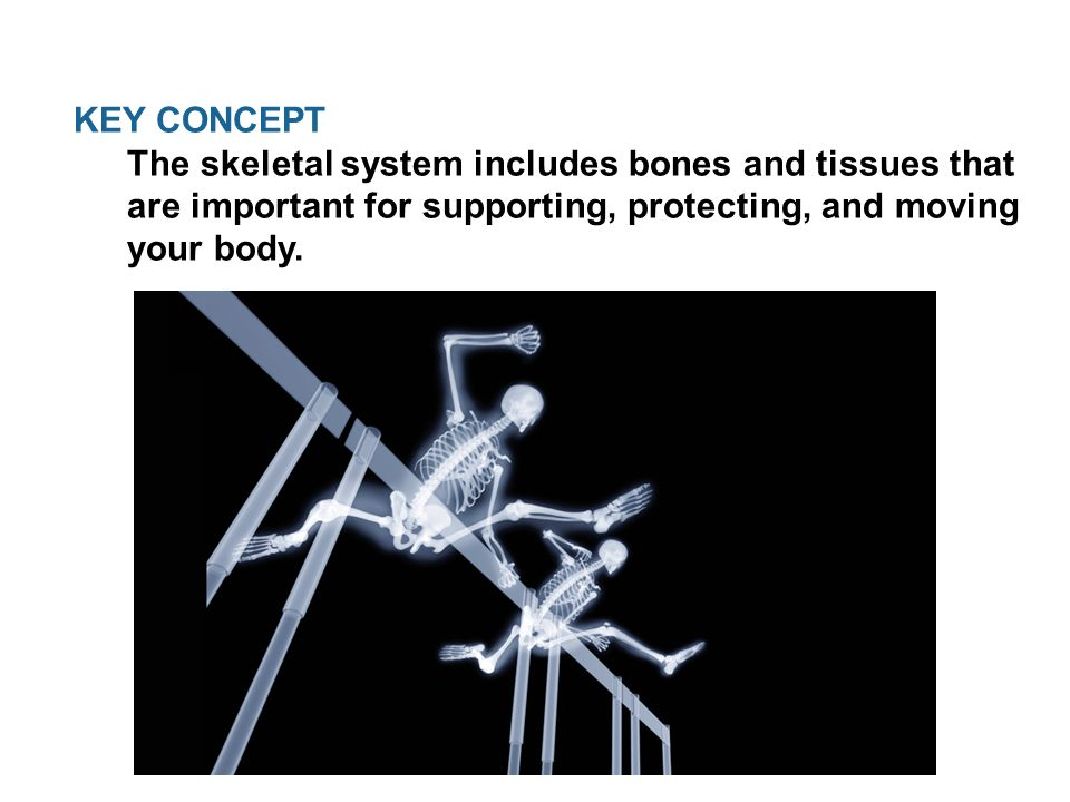 Skeletal, Muscular, and integumentary System. KEY CONCEPT The ...
