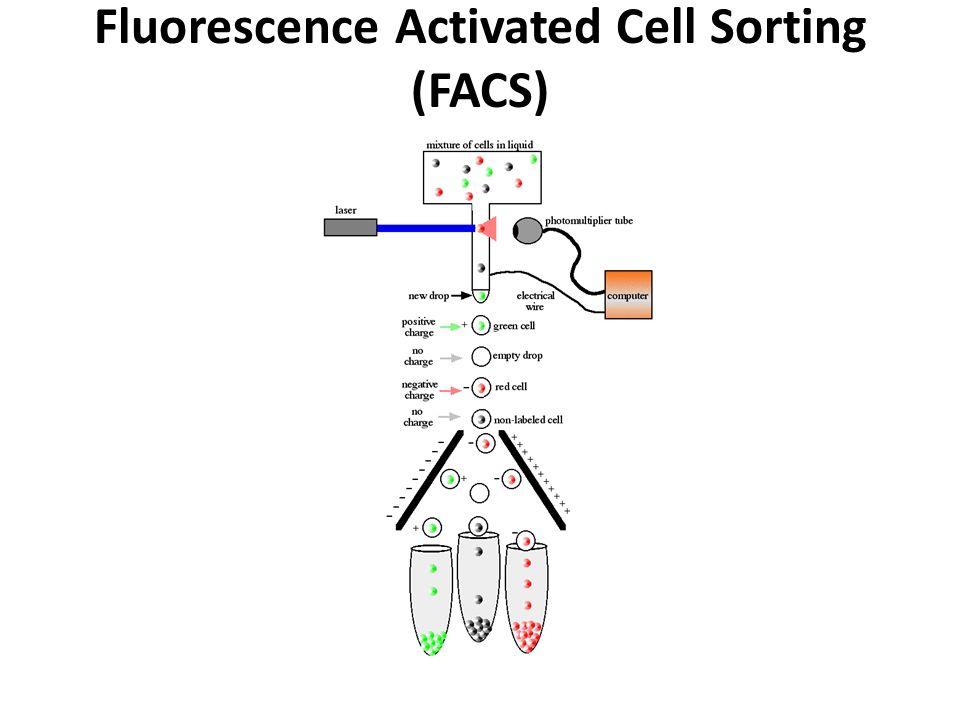 PR_7_ИФА PR_8_Проточная цитометрия  Антитело Варианты ИФА