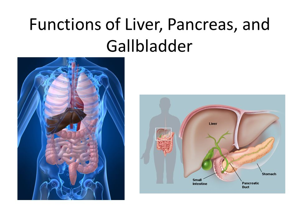 Functions Of Liver Pancreas And Gallbladder The Digestive System