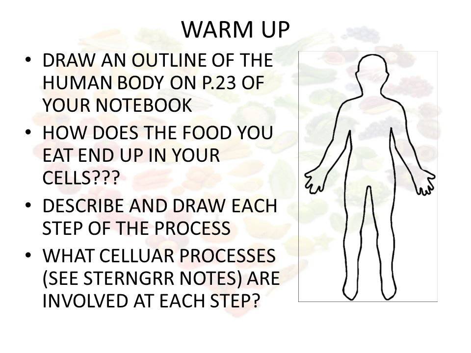 Warm Up Draw An Outline Of The Human Body On P23 Of Your Notebook