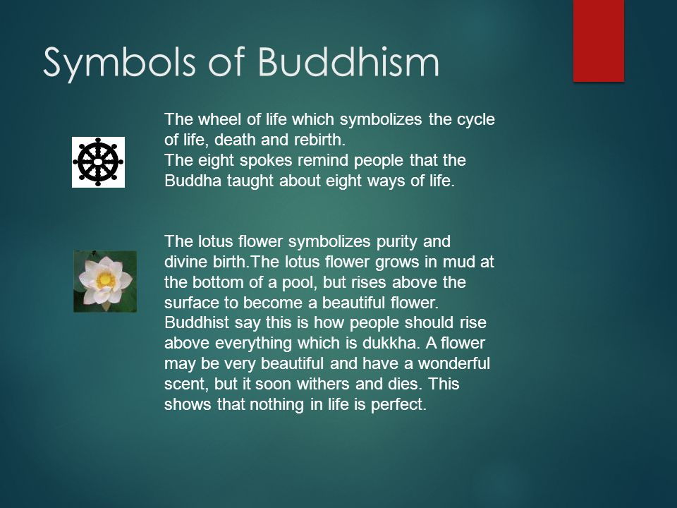 What Do Lotus Flowers Symbolize In Buddhism Flowers Healthy