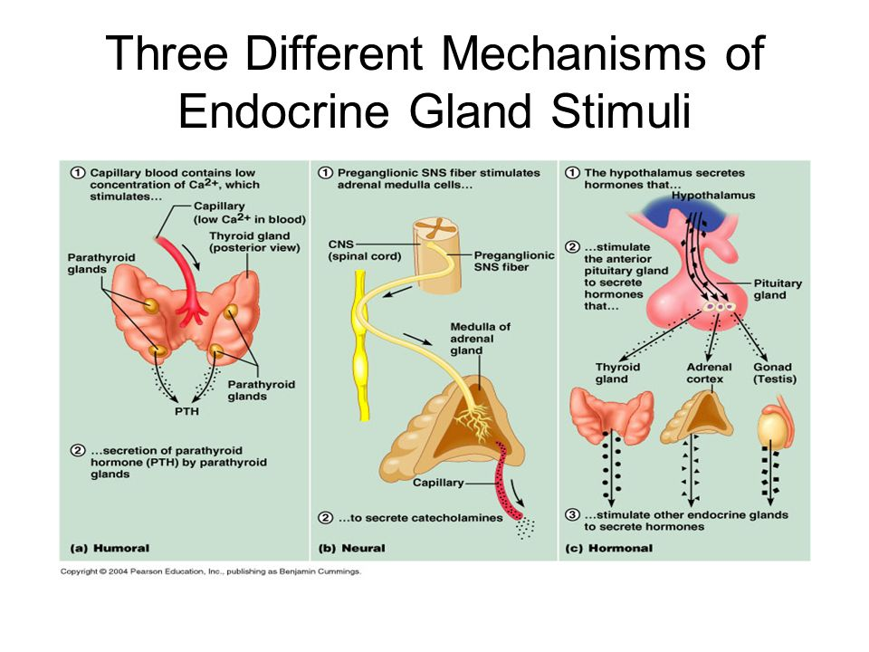 THE ENDROCINE SYSTEM. ENDOCRINE ORGANS AN OVERVIEW Endocrine glands ...