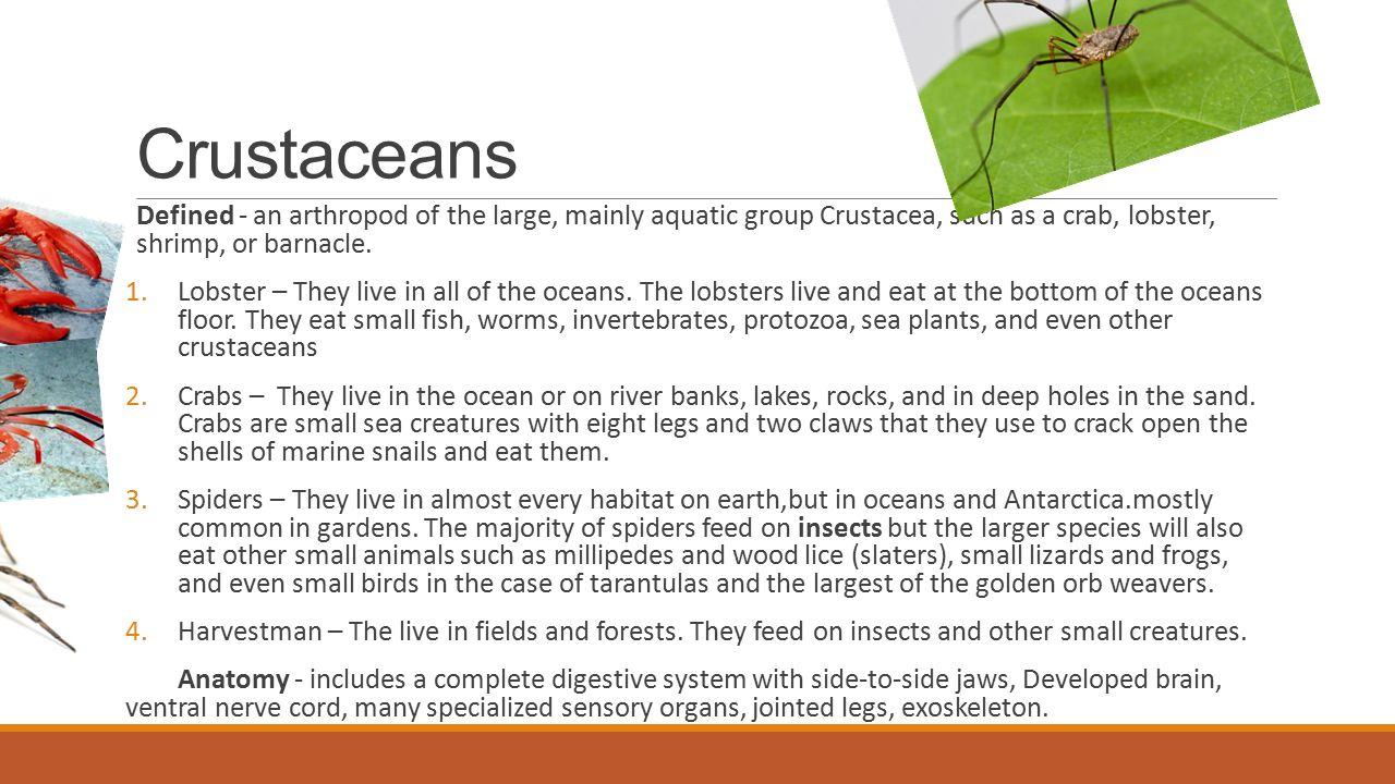 Invertebrate Animals BY: ANTHONY MARCH. Animals Characteristics 1 ...