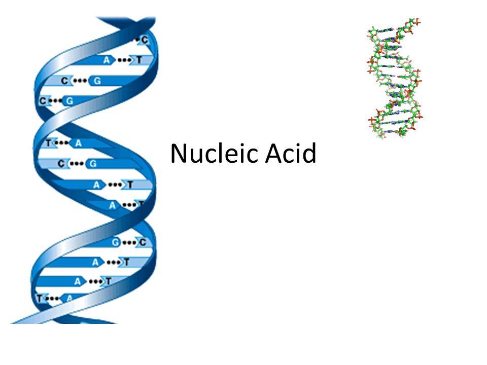 Nucleic acids examples dna rna atp deoxyribonucleic acid ppt.