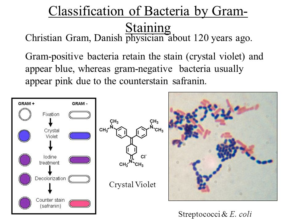 Microbial polysaccharides 1 cell walls of gram positive and gram classification of bacteria by gram staining christian gram danish physician about 120 years ago ccuart Gallery