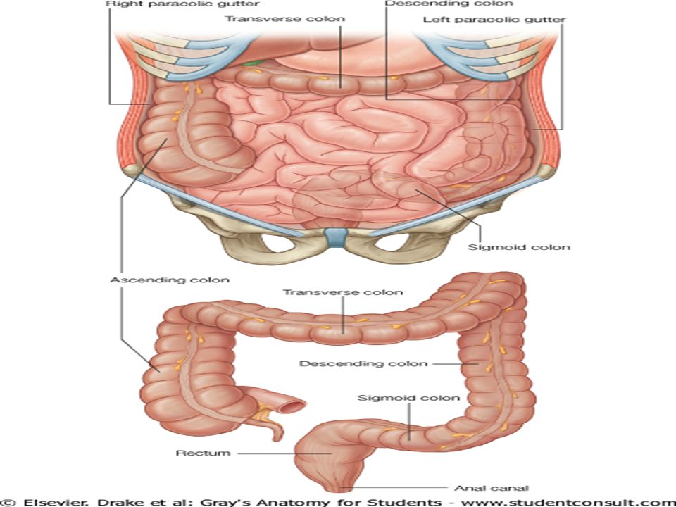 The Large Intestine Ppt Video Online Download