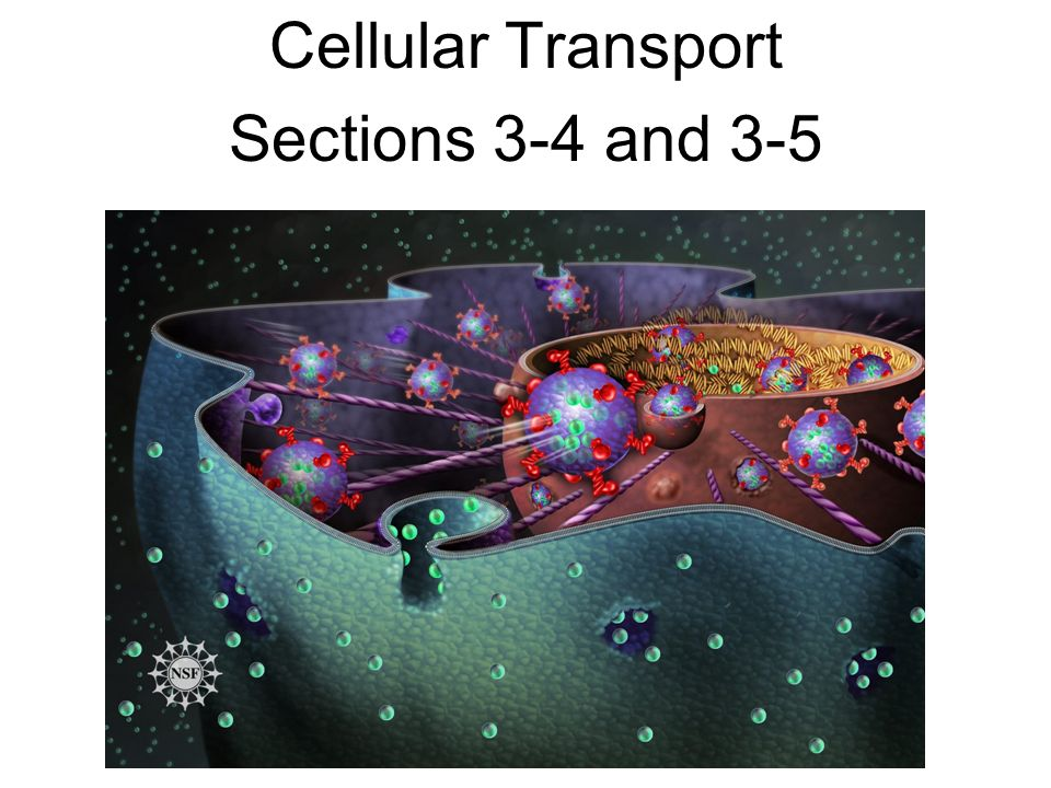 Cellular Transport Sections 3-4 and 3-5