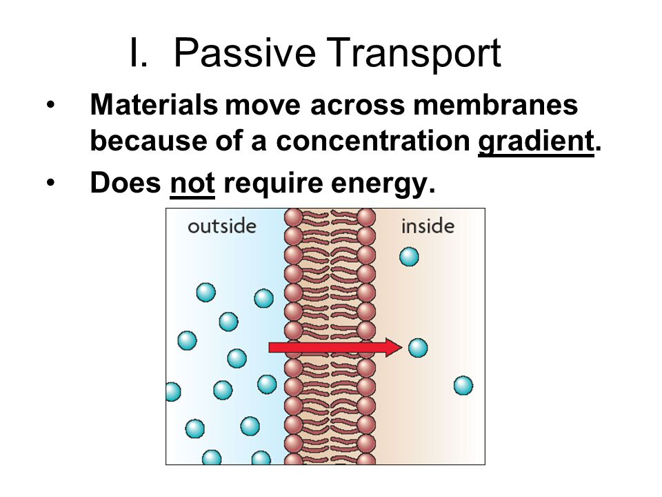I. Passive Transport Materials move across membranes because of a concentration gradient.