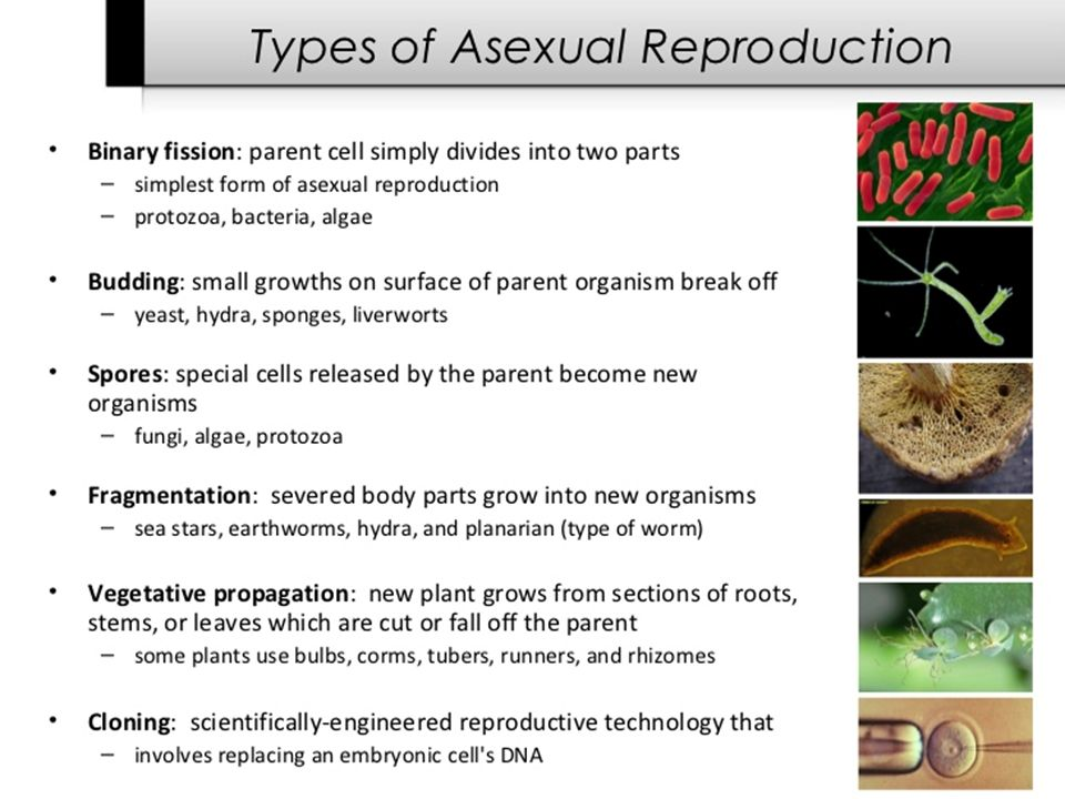 Asexual reproduction plants runners knee