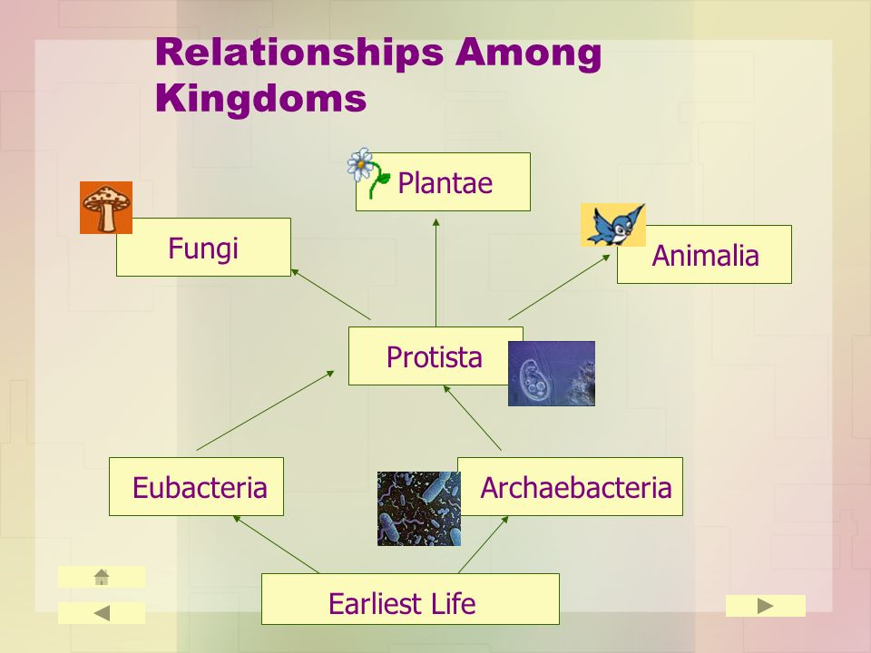 Relationships Among Kingdoms EubacteriaArchaebacteria Protista Fungi Plantae Animalia Earliest Life