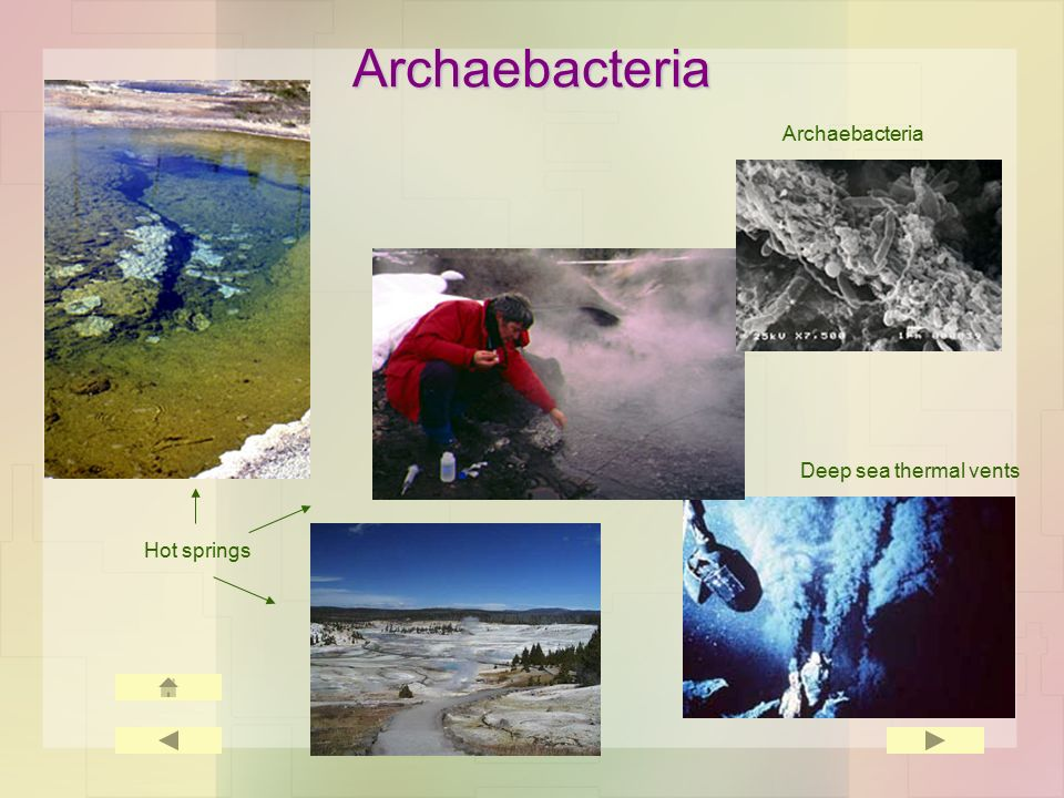 Archaebacteria Hot springs Deep sea thermal vents Archaebacteria