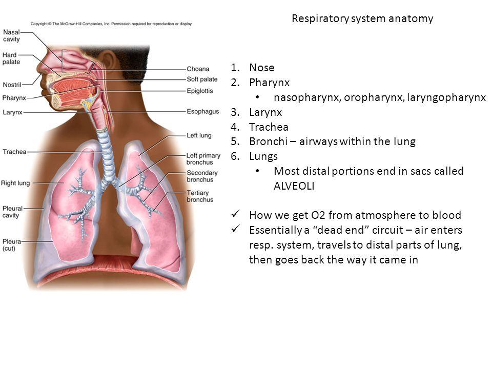 Biology 322 – Human Anatomy Respiratory system. Respiratory system ...