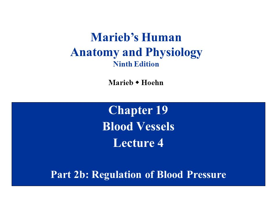 Chapter 19 Blood Vessels Lecture 4 Part 2b: Regulation of Blood ...