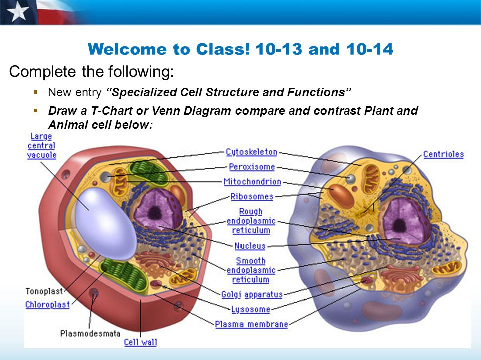 Animal cell diagram chart free car wiring diagrams welcome to class and complete the following new entry rh slideplayer com animal cell diagram chapter 7 biology pearson animal cell diagram chapter 7 biology ccuart Image collections