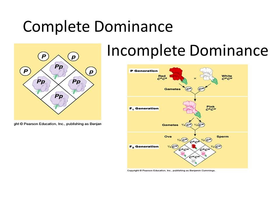 The biology of genetic dominance