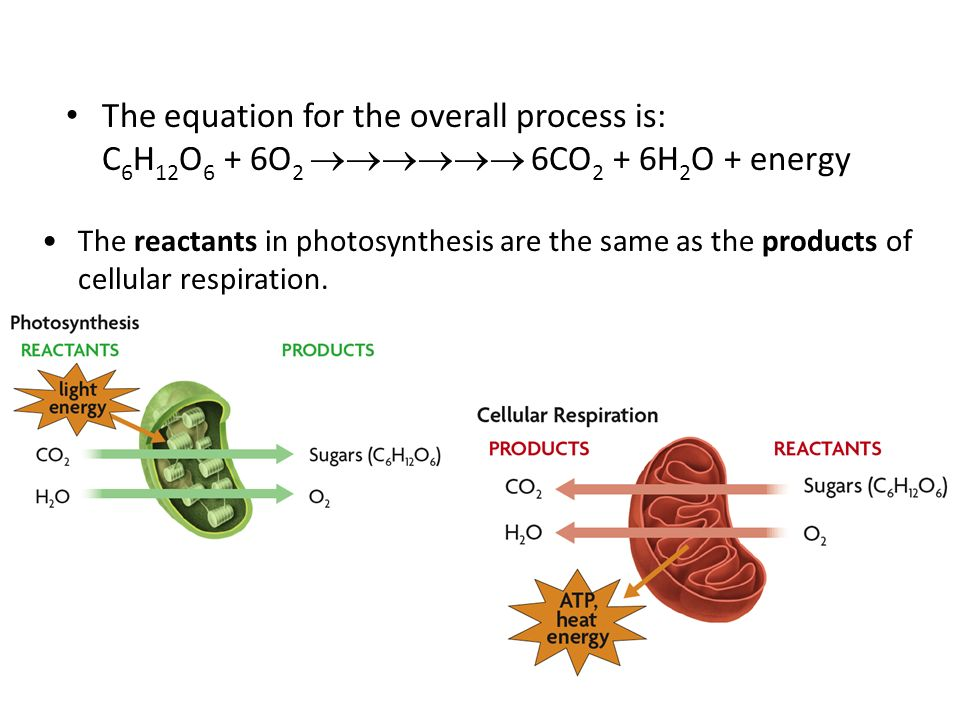 The equation for the overall process is: C 6 H 12 O 6 + 6O 2  6CO 2 + 6H 2 O + energy The reactants in photosynthesis are the same as the products of cellular respiration.
