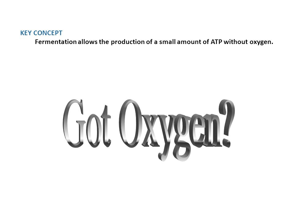 KEY CONCEPT Fermentation allows the production of a small amount of ATP without oxygen.