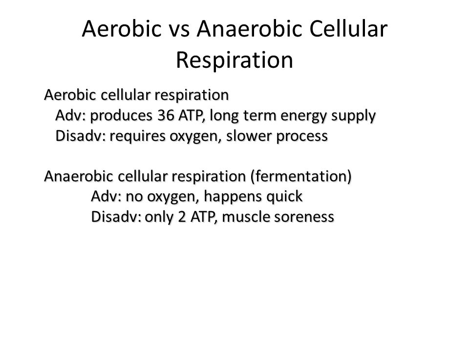 Aerobic vs Anaerobic Cellular Respiration Aerobic cellular respiration Adv: produces 36 ATP, long term energy supply Adv: produces 36 ATP, long term energy supply Disadv: requires oxygen, slower process Disadv: requires oxygen, slower process Anaerobic cellular respiration (fermentation) Adv: no oxygen, happens quick Disadv: only 2 ATP, muscle soreness