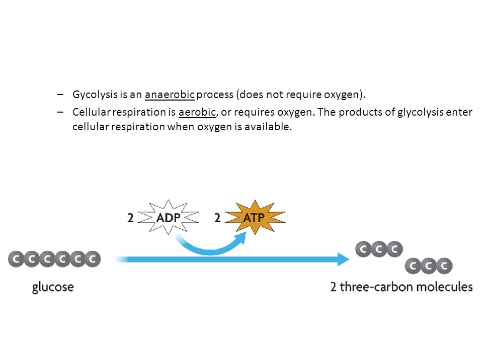 –Gycolysis is an anaerobic process (does not require oxygen).