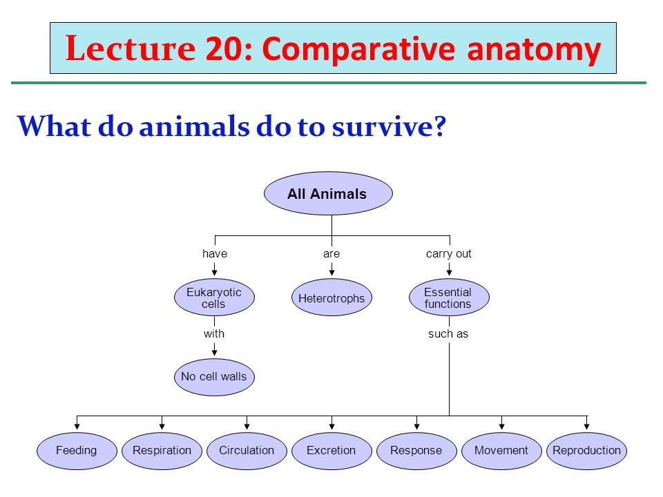 Lecture 20: Comparative anatomy What do animals do to survive ...