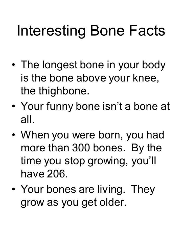 Skeletal System 206 Total Bones Cranium Mandible Sternum Rib