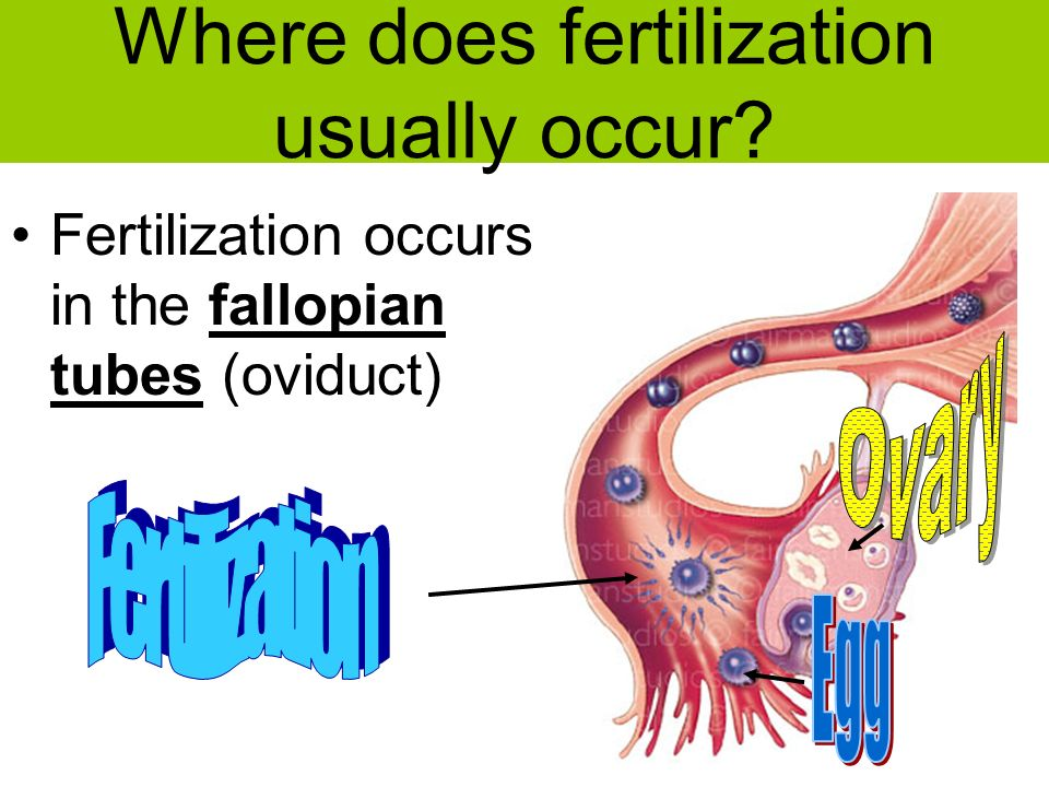 Aim How Is Internal Fertilization And Development Different From