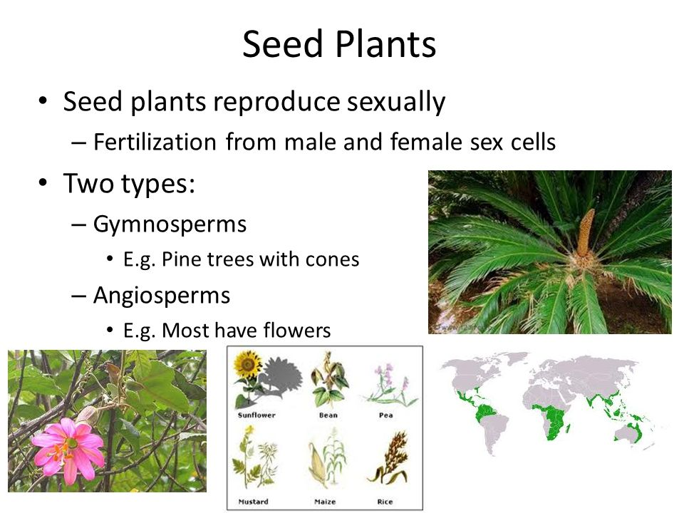 Flowers that reproduce sexually