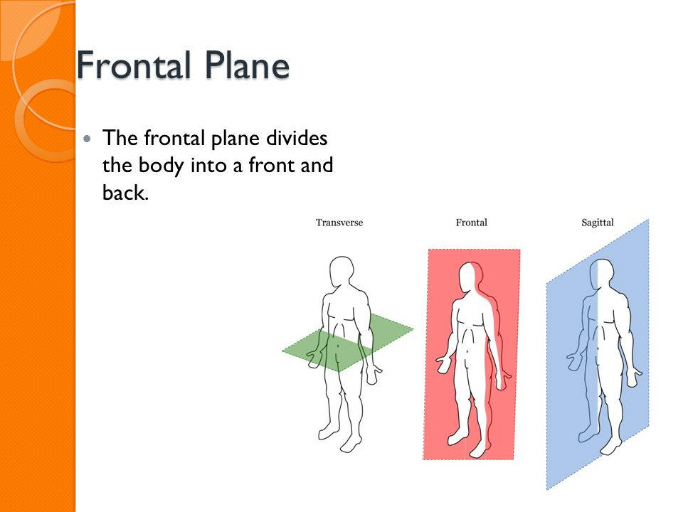 Intro To Sports Medicine Anatomical Directions And Movements Ppt