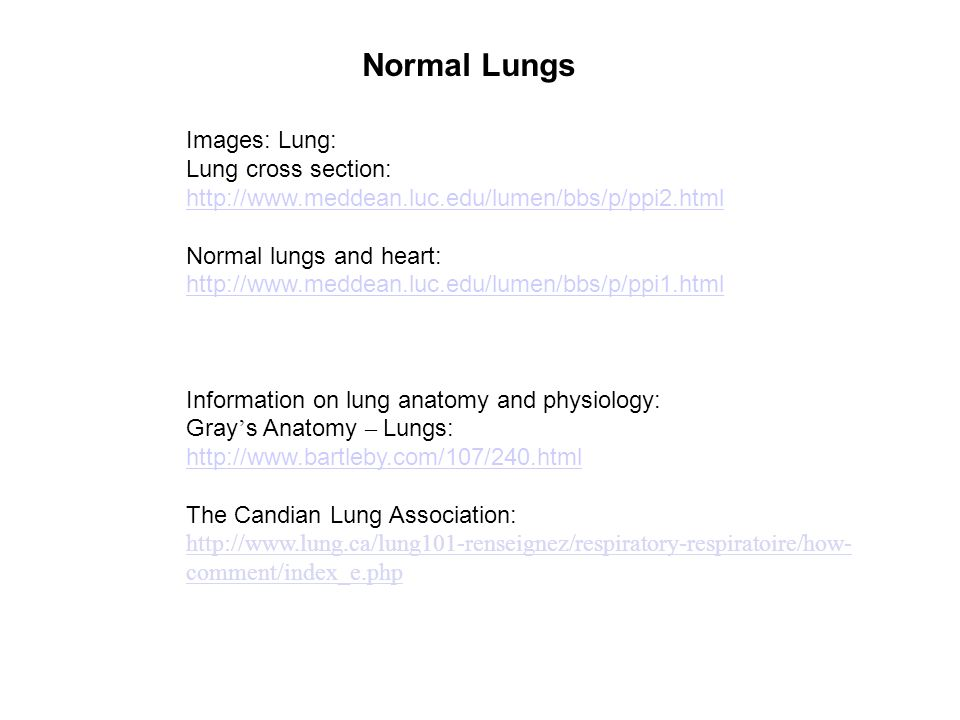Normal Lungs Images Lung Lung Cross Section Normal Lungs And