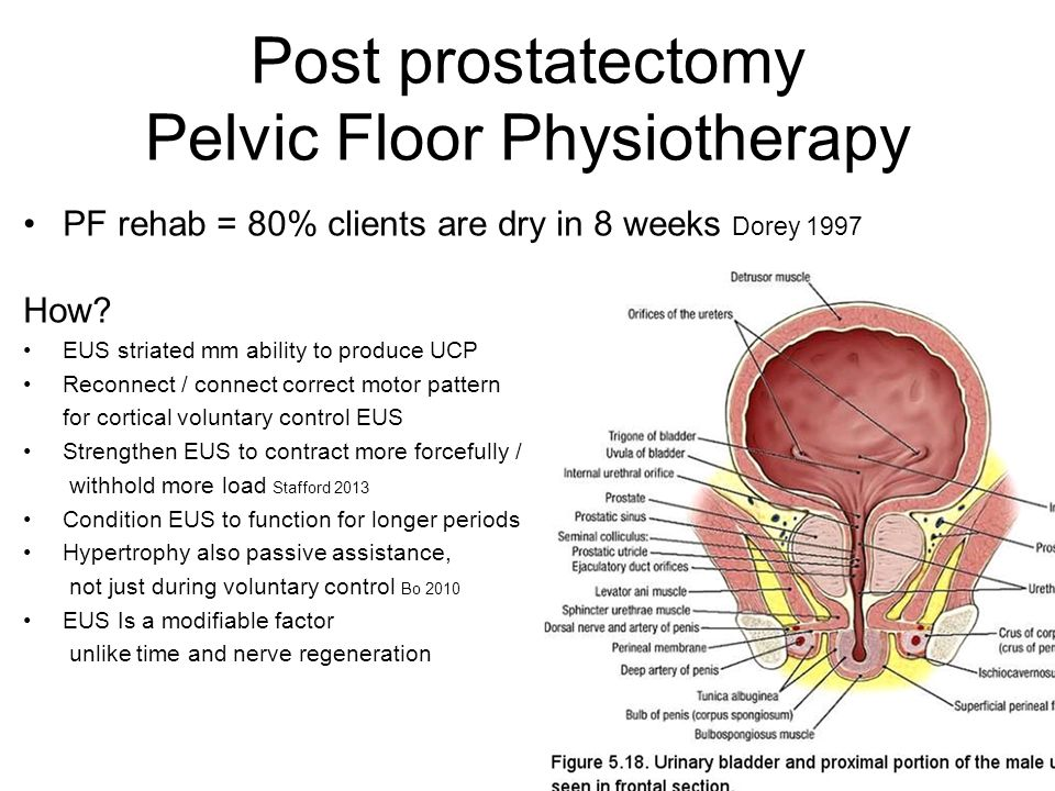 Pelvic Floor Physiotherapy Following Prostatectomy By Danielle