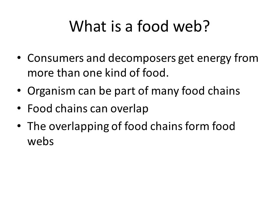 What is a food web. Consumers and decomposers get energy from more than one kind of food.