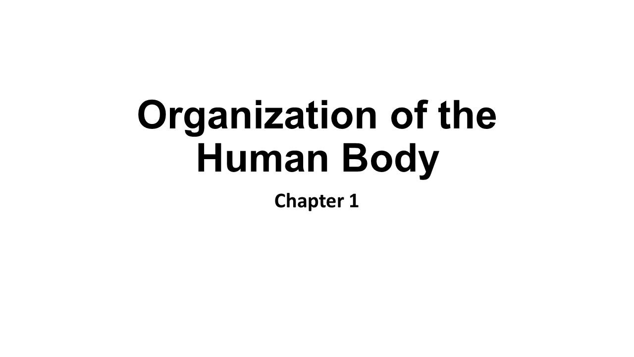 Organization Of The Human Body Chapter 1 Anatomy And Physiology